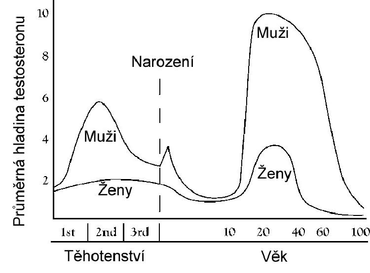 Vyvoj hladiny testosteronu žen a mužů v průběhu života: Od 40 let hladina prudce klesá u obou pohlaví.