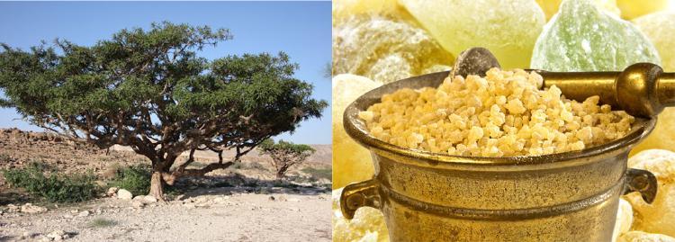 Nejčastěji se používá extrakt z mlétého prášku z kořene.