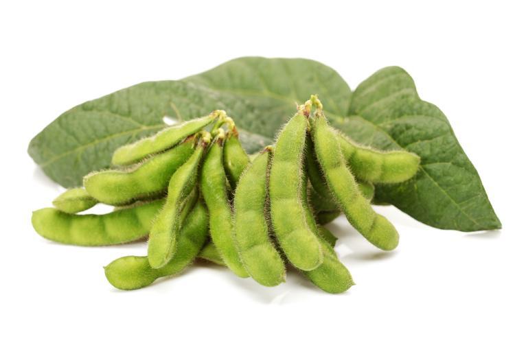 Plody sojových bobů jsou největším zdrojem fytoestrogenů v potravinách.